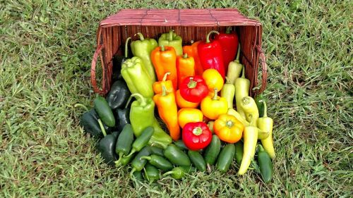 Hot peppers, sweet peppers, and every pepper in between!