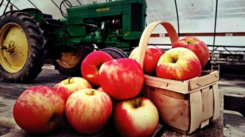 The one and only Honey Crisp Apples!