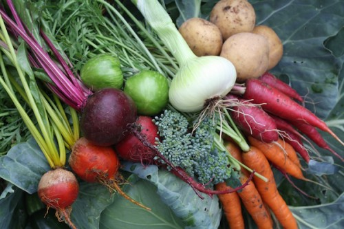 The Cherry Valley Organics CSA Pittsburgh Farm Share Program
