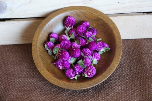 Dried Gomphrena, Purple