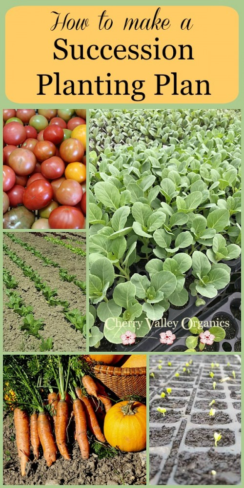 Succession Planting Plan for Gardeners and Farmers