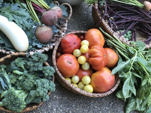 Cherry Valley Organics: Farm Share Pittsburgh sample box