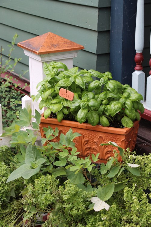 Where to buy organic herb plants in Pittsburgh - Cherry Valley Organics Farm
