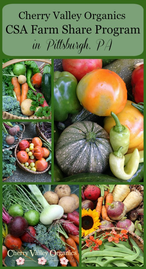 The Cherry Valley Organics CSA Pittsburgh Farm Share Program fills your Pittsburgh kitchen with locally grown, organic fruits and veggies every week!