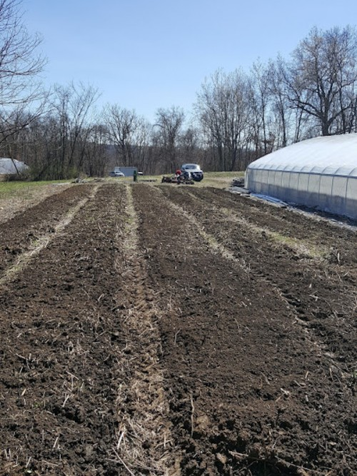 Cucumber farming field ready for planting