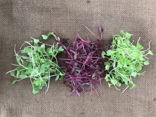 Types of microgreens for sale in Pittsburgh