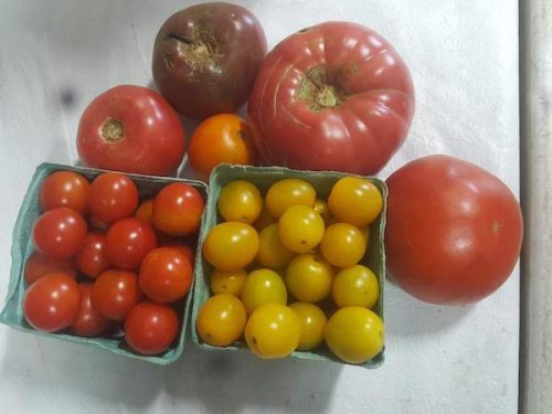 Mixed heirloom tomato varieties