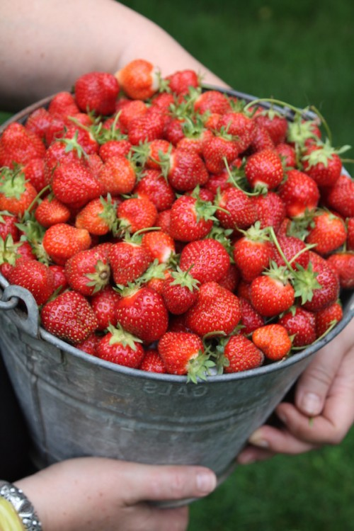 Why should you eat organic strawberries?