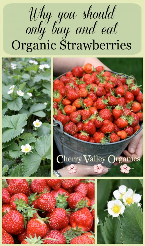Why organic strawberries are a better choice for your family