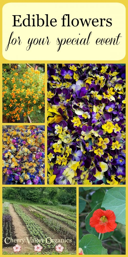 Looking for a source of organic edible flowers for your special event? Our farm has you covered!