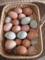 Many colored eggs from many types of hens