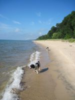The dogs LOVE the beach down the street!