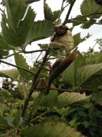 Beneficial insects LOVE organic farms