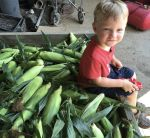 Sweet corn load
