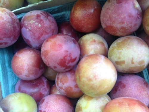 Early Plums