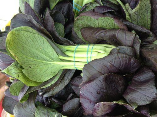 Purple Pac choi