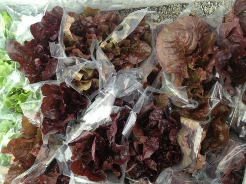 Lettuce heads bagged to sell at market