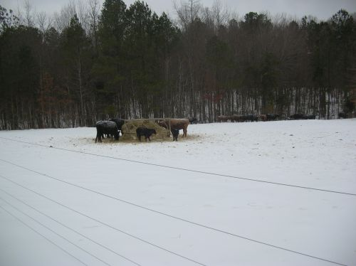 WINTER 2010 AT PERSIMMON GROVE