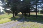 The tree-lined lane