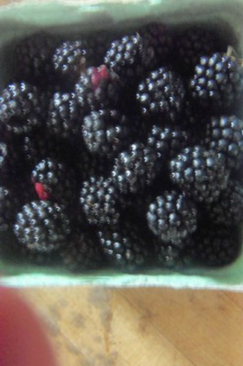 blackberries picked