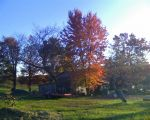 Fall at the tobacco barn