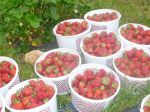 Strawberries in Buskets