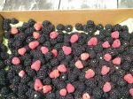 Blackberries & raspberries in a box