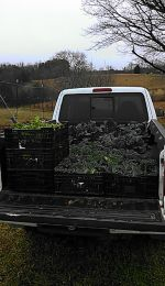 Truckload of kale!