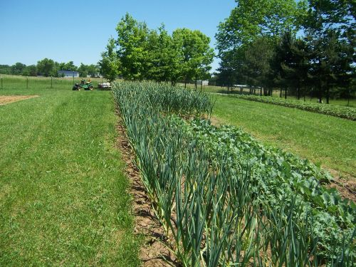 '09 Garlic Crop
