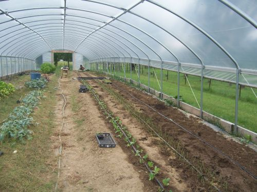 9/11-Fall planting in high tunnel
