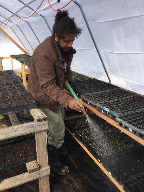 March.2018: Chris watering in greenhouse