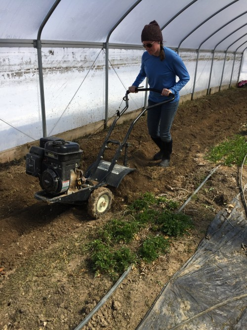 March.2018: Adriane tilling in high-tunnel