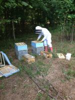 Setting up two new hives.
