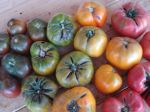 a rainbow of heirloom tomatoes