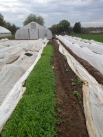 spring brassicas, spinach, and baby salad greens under row cover in the spring