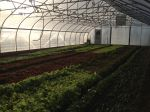 mid-Dec hoophouse