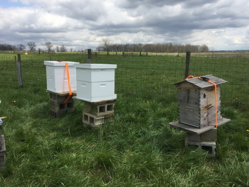 Our new bees!