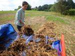 Lucie spreading goat and llama manure in new pasture.