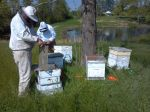 Setting up bee boxes