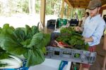 Cleaning Chard and Collards