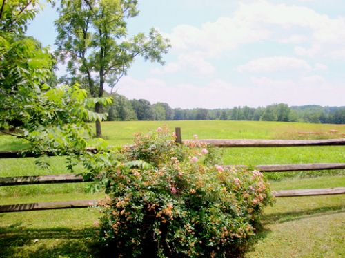 View of Southern pasture from The Lodge