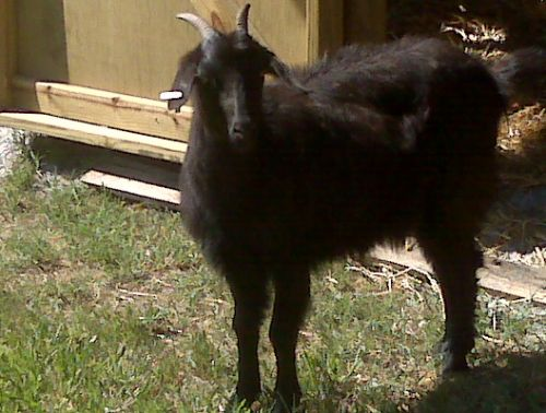 """Midnight"", pregnant with Zora"