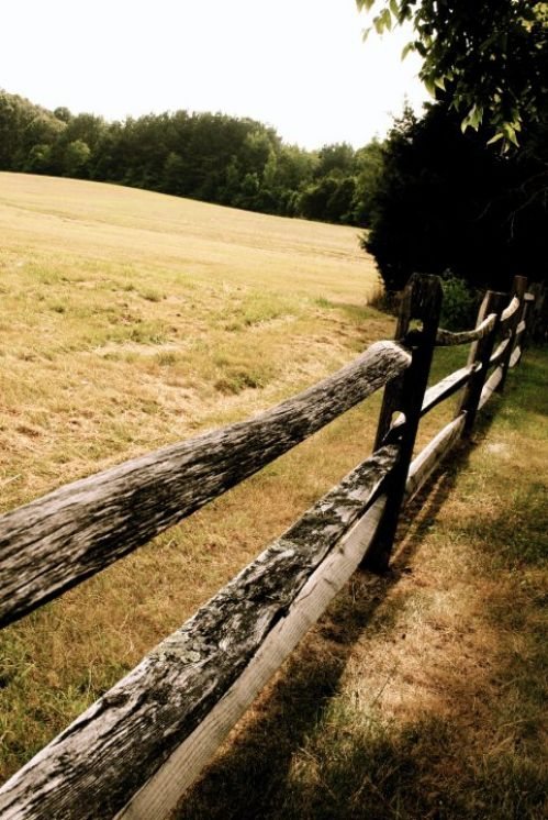 Fenceline to a southern pasture.