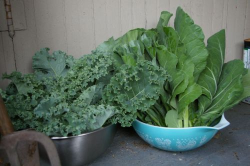 Collards and Kale
