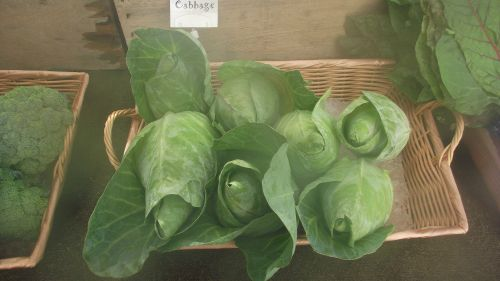Arrowhead Cabbage