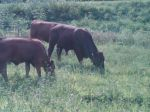Grazing mid summer