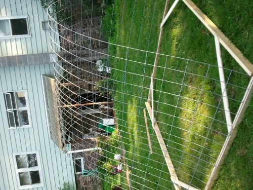 cattle panel hoop house build