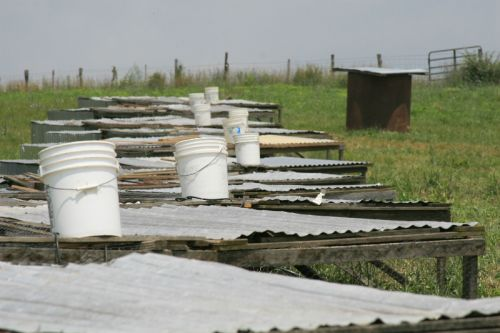 row of broiler shelters at Polyface