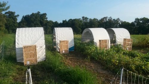 Small hoop houses for a forage trial