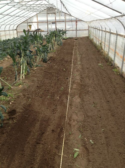 Prepping big hoophouse ground for winter planting.